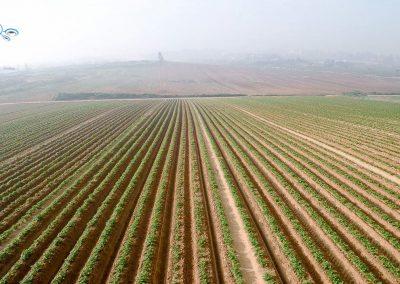 שדות בערפל, אבן יהודה
